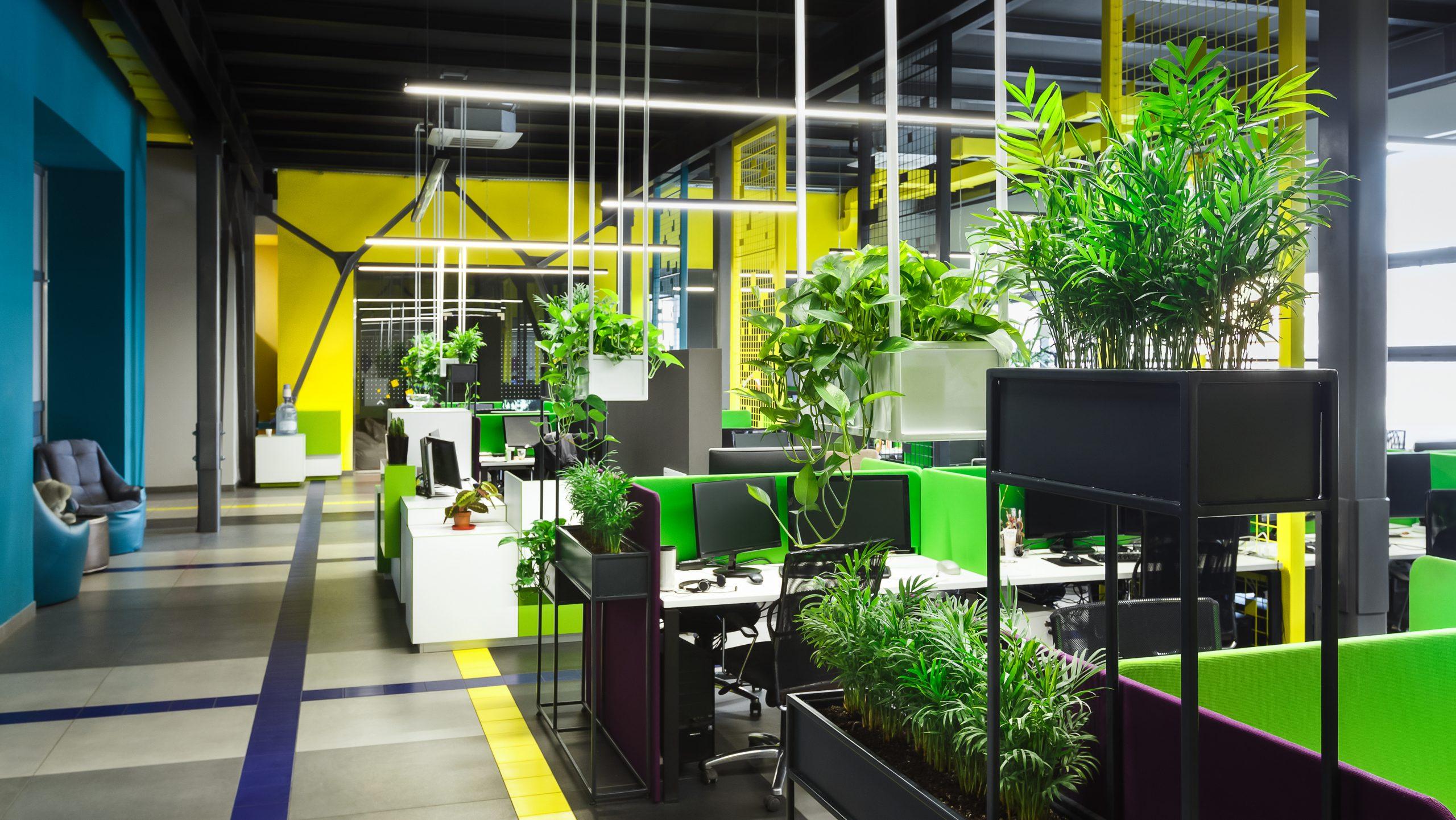 ¿Eres un emprendedor verde?